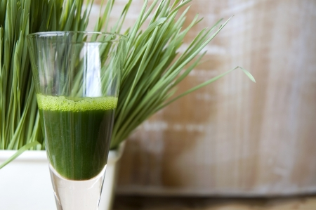 close up shot glass of wheatgrass juice with wheatgrass background Stock Photo