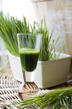 fresh wheatgrass with wheatgrass juice shot Stock Photo