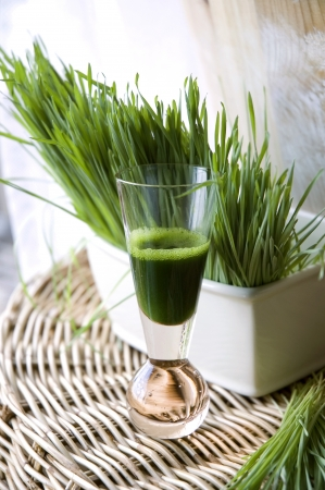 shot glass of fresh wheatgrass juice Stock Photo