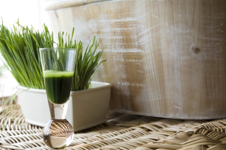 wheatgrass juice in shot glass with fresh wheatgrass background