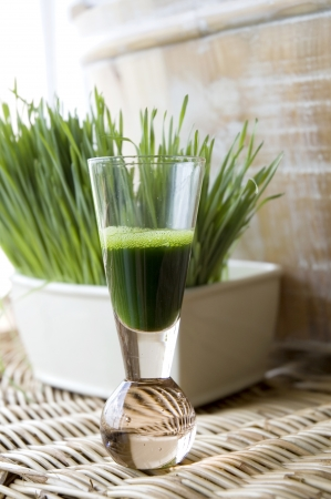 wheatgrass juice in shot glass with wheatgrass background