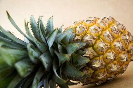 close up   head: close up head of pineapple