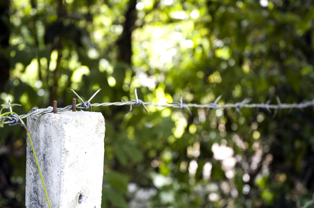 close up barb wire fence in the forest photo