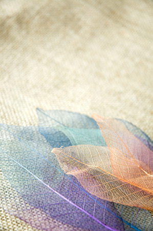 close up sweet skeleton leaves on sackcloth background photo