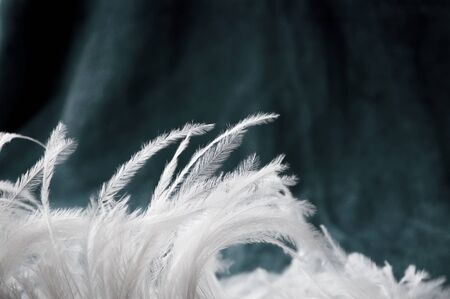 white fur: beautiful white feather on turquoise background