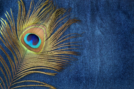 greenish blue: peacock feather on deep blue background