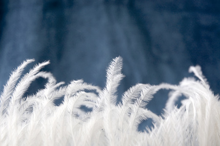 close up small pieces of soft white feather on blue background Stock Photo