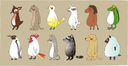 raton laveur: Mignons animaux debout regarder vers l'avant Illustration