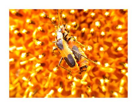 love bugs matting photo