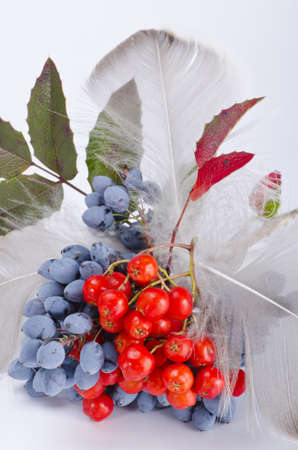 Rowanberry and other fruits Stock Photo - 10294747