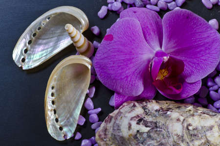 a composition with mussels and orchid photo