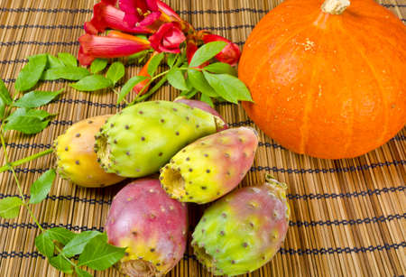 cactus species: Like all true cactus species, prickly pears are native only to the Western hemisphere; however, they have been introduced to other parts of the globe.