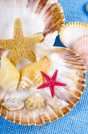 different seashell collection on blue background photo