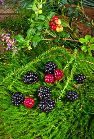 Wild blackberries photo