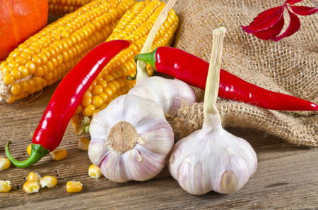Autumn harvest Stock Photo - 11205305