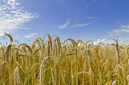 harvest time: harvest time Stock Photo