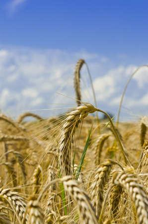 harvest time photo