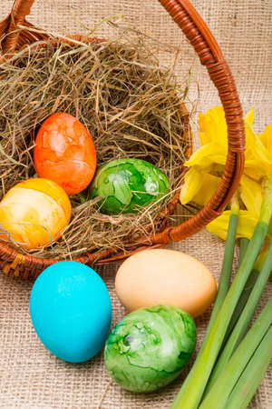 Coloured eggs photo