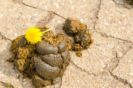 Resultado de imagen de mierdas DE CABALLO asfalto