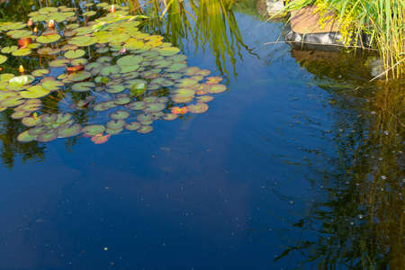 bassin jardin: �tang de jardin