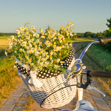 Baskets with daisies at sunset  photo