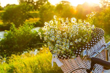 Baskets with daisies at sunset  Standard-Bild