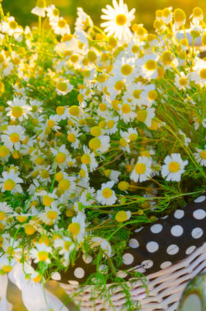 bald head island: Baskets with daisies at sunset  Stock Photo