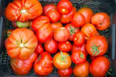 vitaminic: The tomato  Solanum lycopersicum