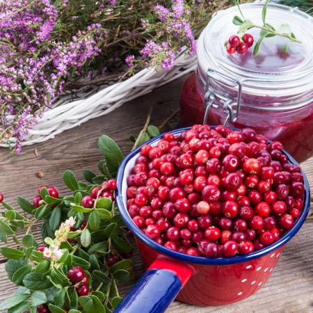 Lingonberries photo