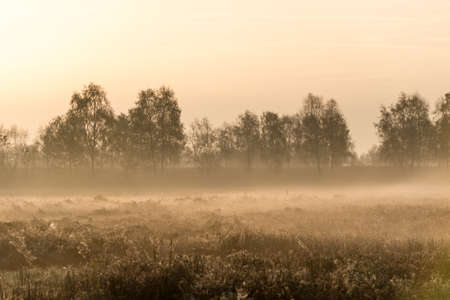 the moorland in the autumn photo