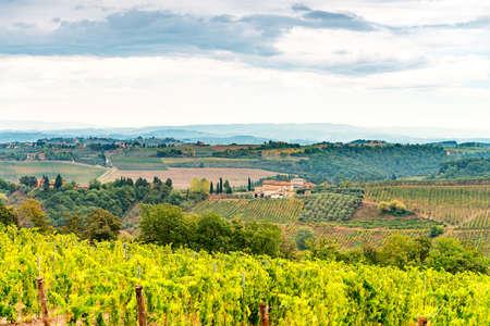 viñedo: viñedos en la Toscana
