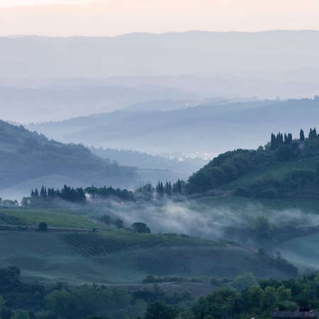 vineyard at sunset: Fields in Tuscany