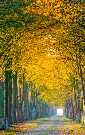 autumn in East Frisia