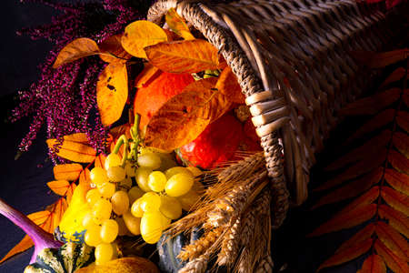 The beautiful and autumnal cornucopia 版權商用圖片 - 134960804