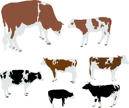 cows and calf vector silhouette Ilustração