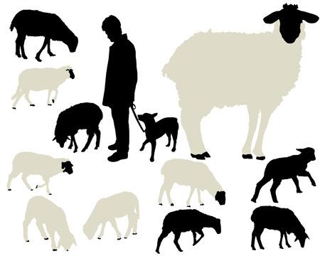 sheep collection  イラスト・ベクター素材