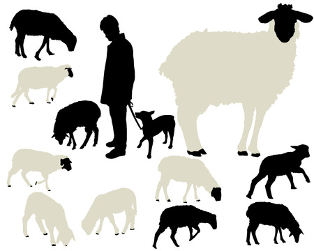 sheep sign: sheep collection Illustration
