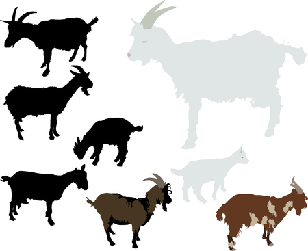 ruminant: goats Illustration