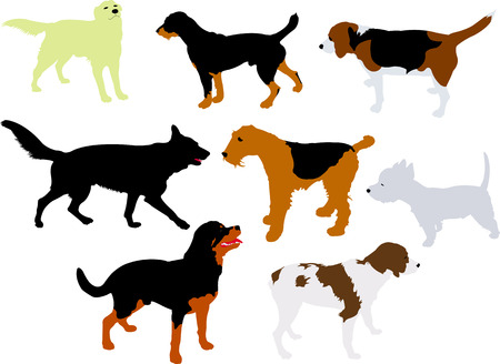spaniel: dogs vector silhouette Illustration