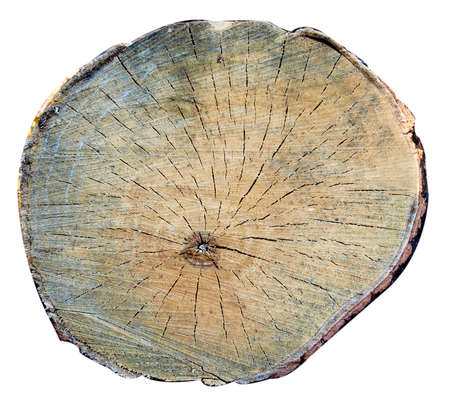 A top view of a tree stump, isolated image close view