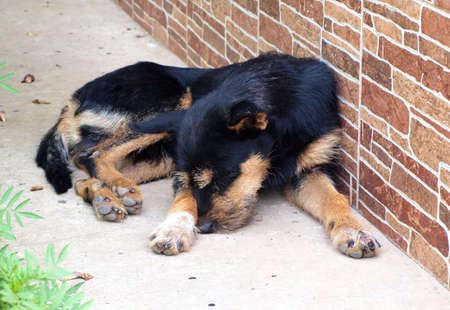 A cute dog sleeping near the house wall photo