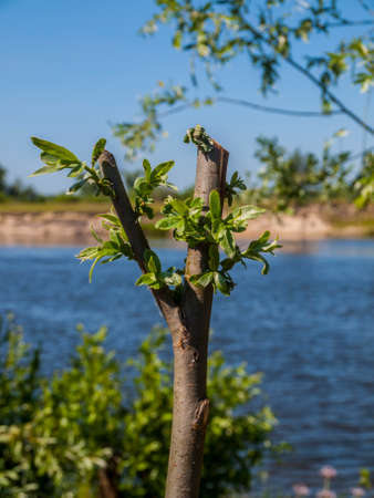 revive: Green branch standing in front of summer river background. Life conceptual photo