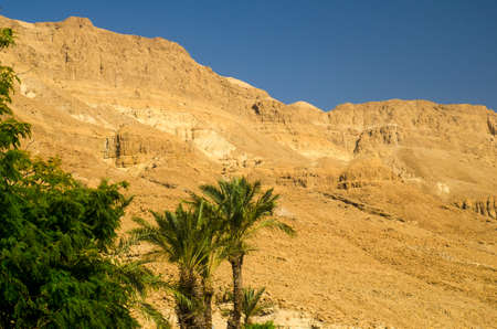 judean hills: Oasis with green palm trees in Judean desert. Old mountains and rocks of legendary Old Testament times