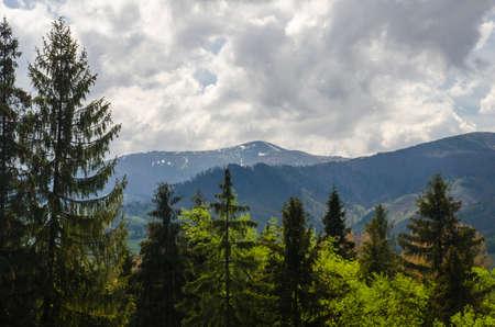 En lo profundo del bosque de la montaña. Montañas cubiertas de nieve y los árboles del bosque verde. fondo natural