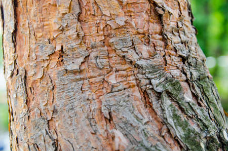 tree detail: Tree bark close view. Nature in details