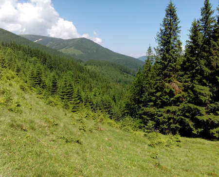 amazing wallpaper: Amazing Carpathian mountains natural background, summer wallpaper