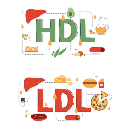 Illustration of LDL and HDL concept with icons.