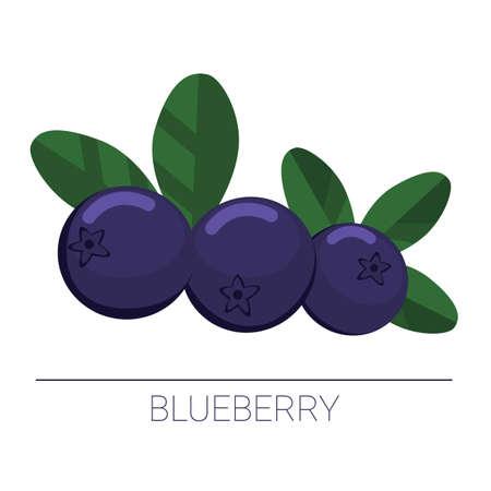 Blueberry vector illustration Ilustração
