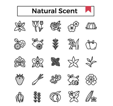 Natural scent outline icon set.