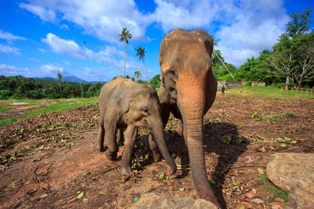 Herd of elephants in Sri Lanka Stok Fotoğraf - 106626318